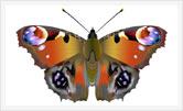 2D графика | Художник | Дизайнер | Олег Гей | olegey.com  - 18