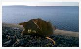 Фотография | Пейзаж | Олег Гей | olegey.com  - 76