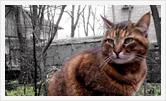 Фотография | Портрет | Олег Гей | olegey.com  - 35