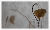 Фотография | Натюрморт | Олег Гей | olegey.com  - 2