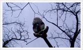 Фотография | Натюрморт | Олег Гей | olegey.com  - 31